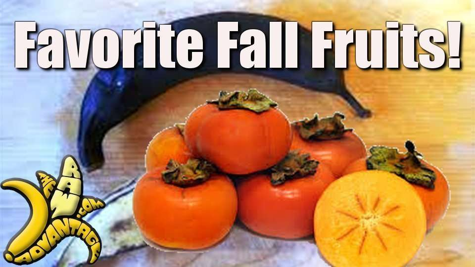 First Video Blog, Favorite Fall Fruits!