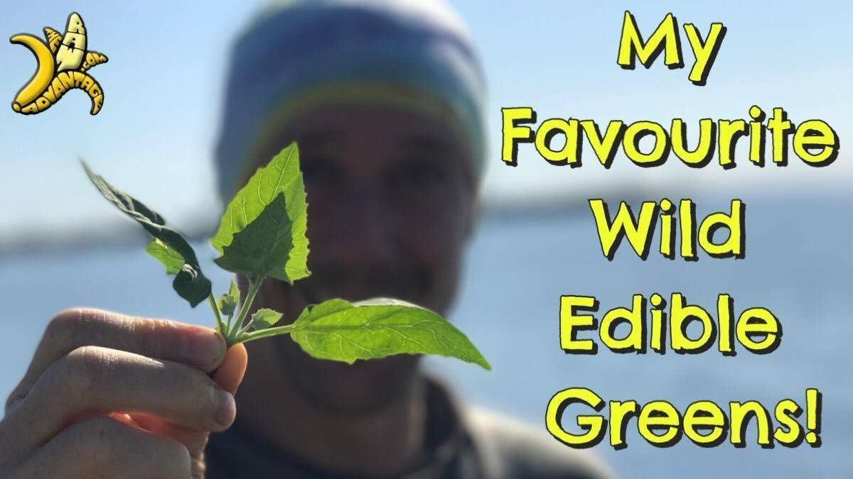 My Favourite Wild Edible Greens!