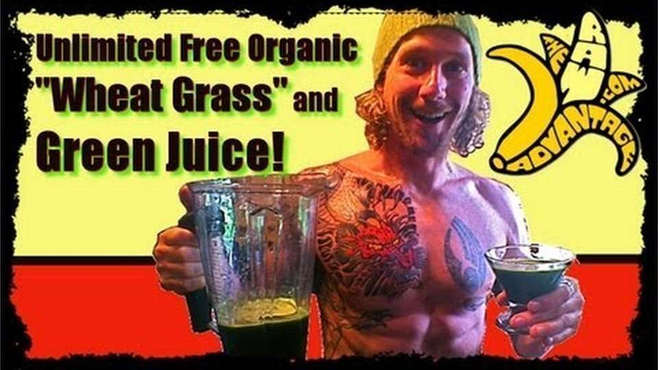 Unlimited Free Local Organic Wheat Grass / Green Juice!