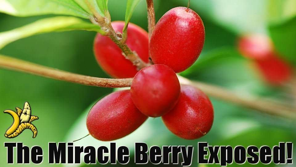 The Miracle Berry Exposed!