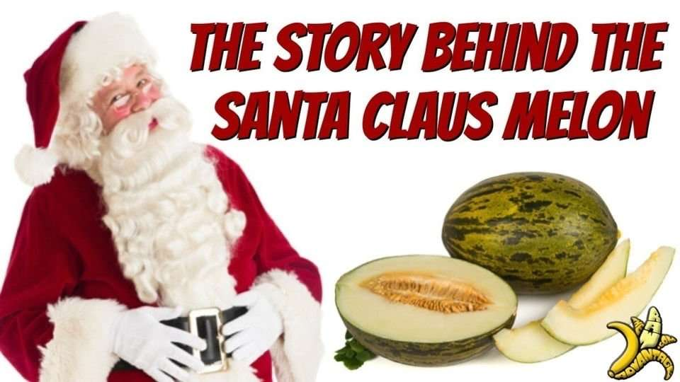 The Story Behind the Santa Clause Melon!
